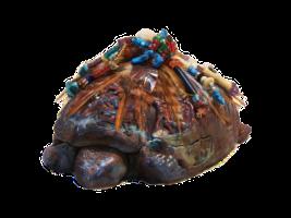 tortoise trans